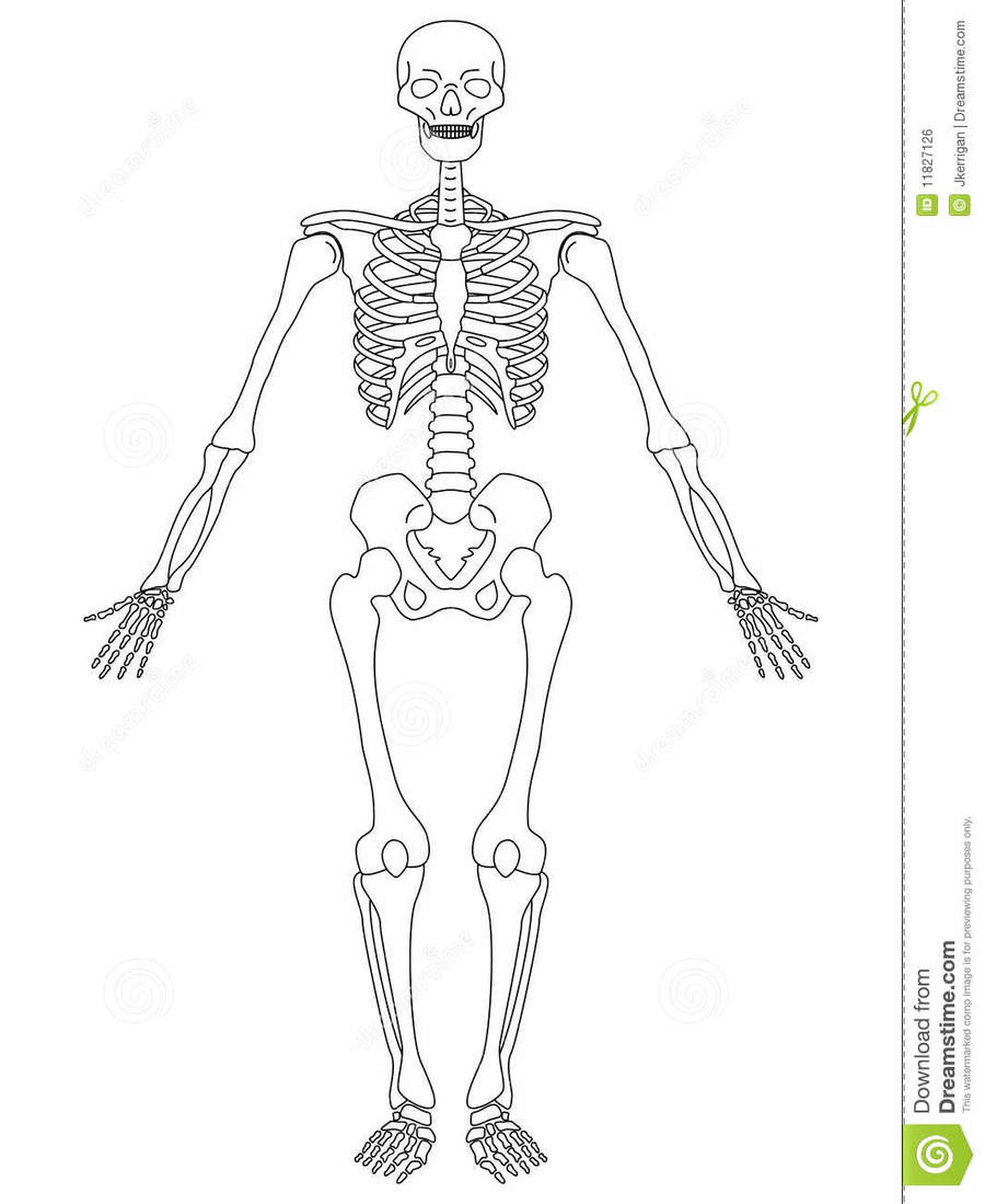 Download Human Skeleton Back View Clipart Pizza Drawing Clipart