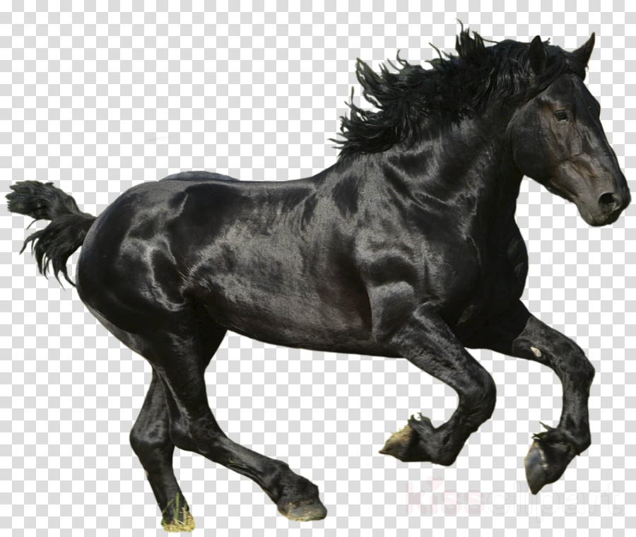 black horse png clipart Horse Pony