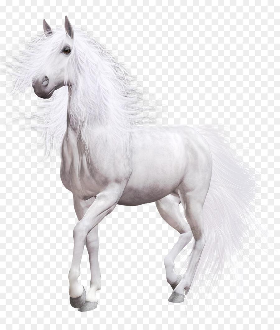 Clip Art Paint Horse