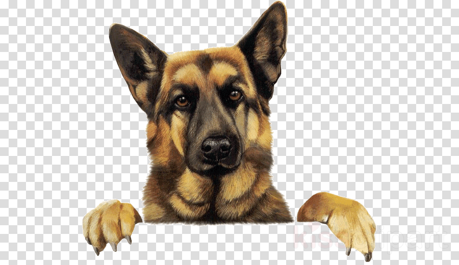 german shepherd png clipart Old German Shepherd Dog Labrador Retriever