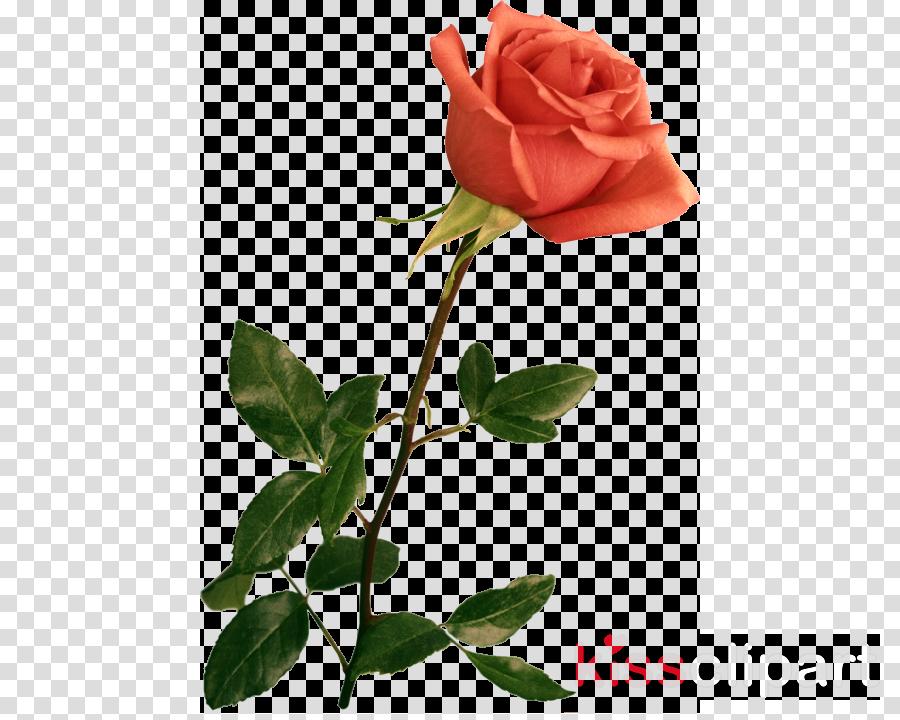 Wedding Flower Rose Transparent Png Image Clipart Free Download