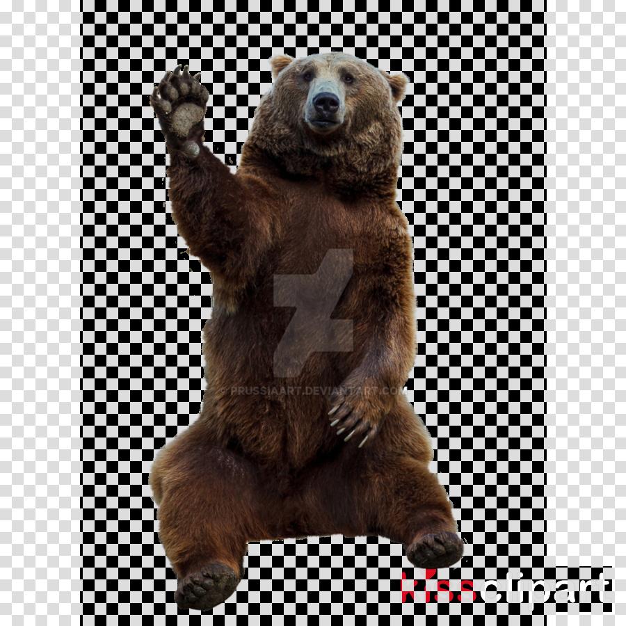 Brown bear clipart Eurasian brown bear Kamchatka brown bear
