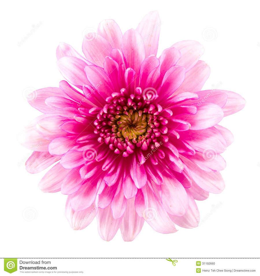 Download fleur rose et jaune clipart flower bouquet garden roses download fleur rose et jaune clipart flower bouquet garden roses flower yellow dahlia izmirmasajfo