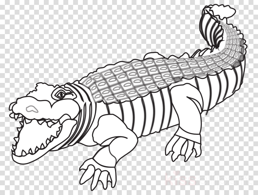 Crocodile Alligators Drawing Transparent Image Clipart Free