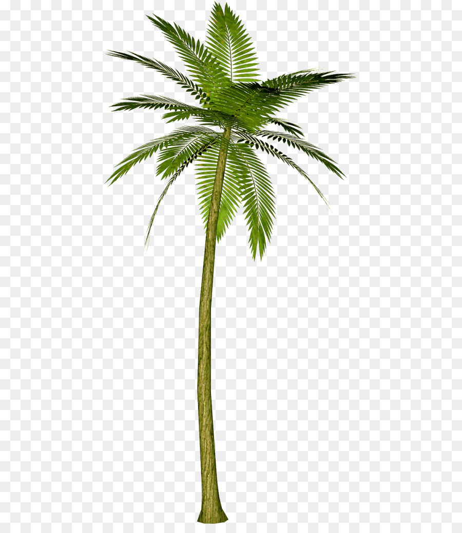 Coconut Tree Cartoon Clipart Tree Plant Leaf Transparent Clip Art Here you can explore hq cartoon tree transparent illustrations, icons and clipart with filter setting like size, type, color etc. coconut tree cartoon clipart tree