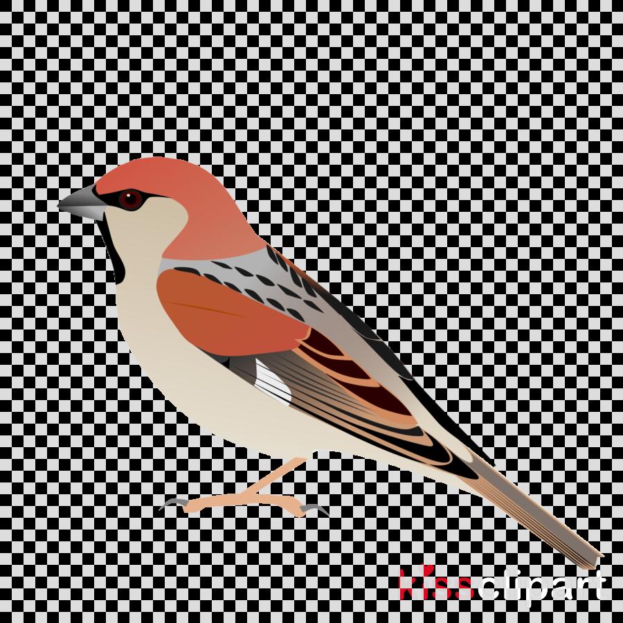 beak clipart House sparrow European robin Bird