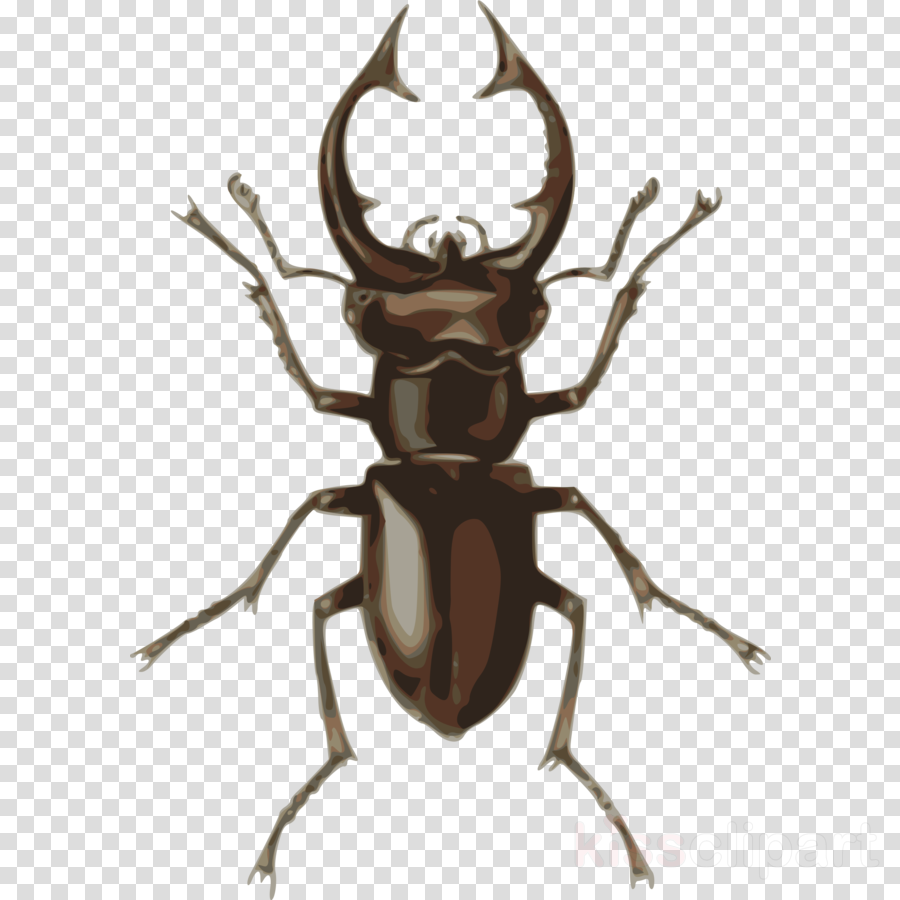 stag beetle clipart Beetle Clip art