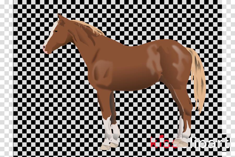 horse clipart Mare American Quarter Horse Arabian horse
