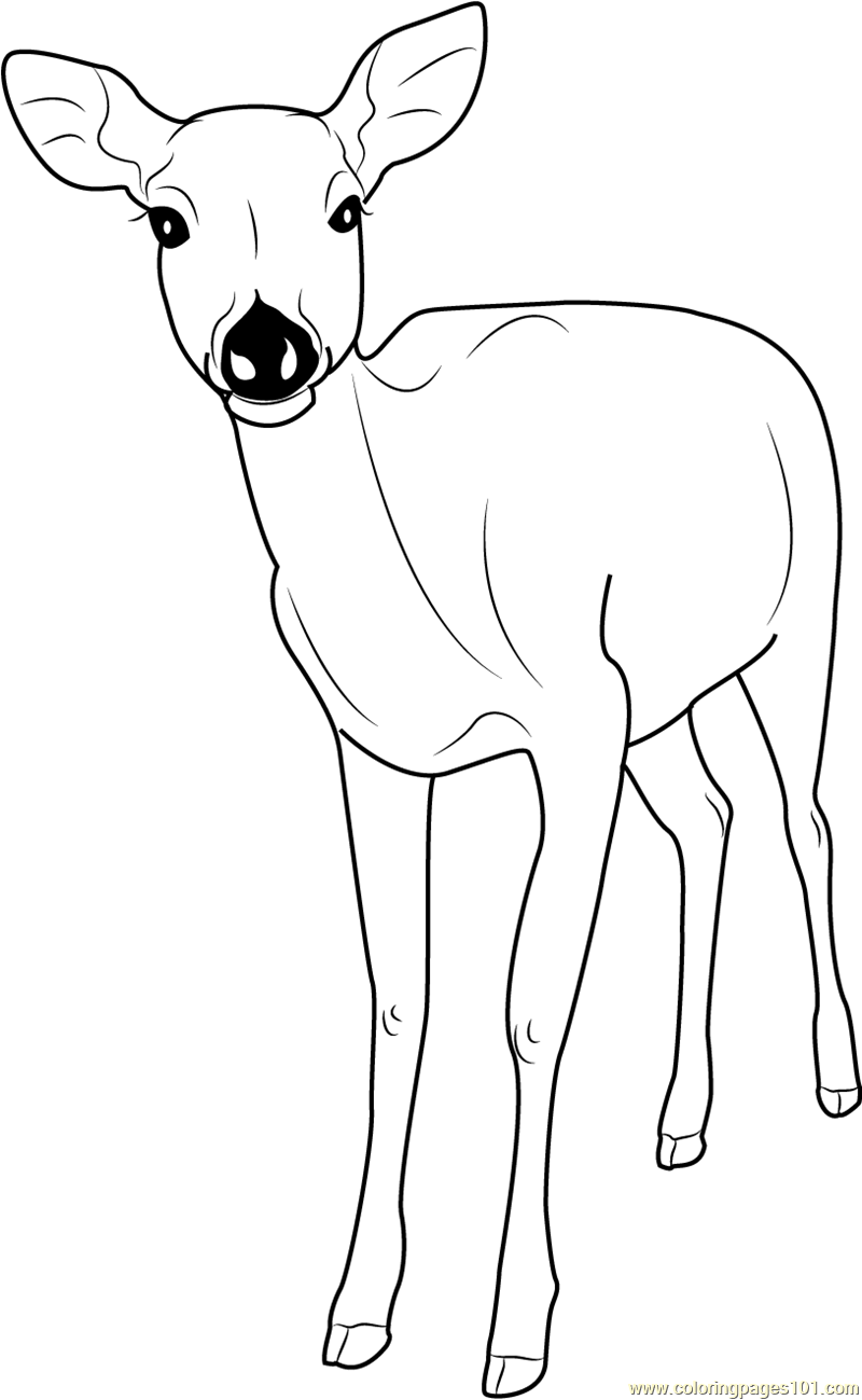 Free Printable Deer Coloring Pages For Kids   Cool2bKids   1299x800