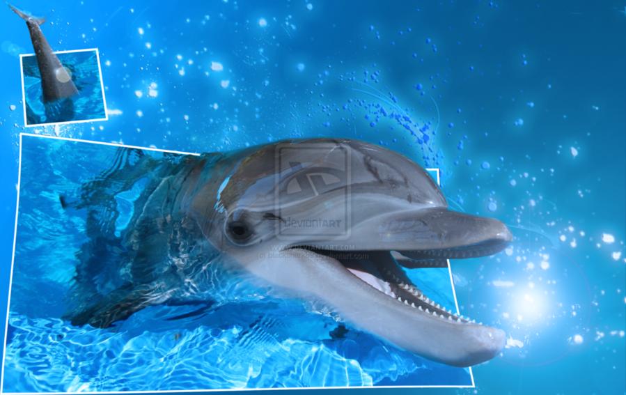 dolphin screensaver clipart Desktop Wallpaper Miami Dolphins