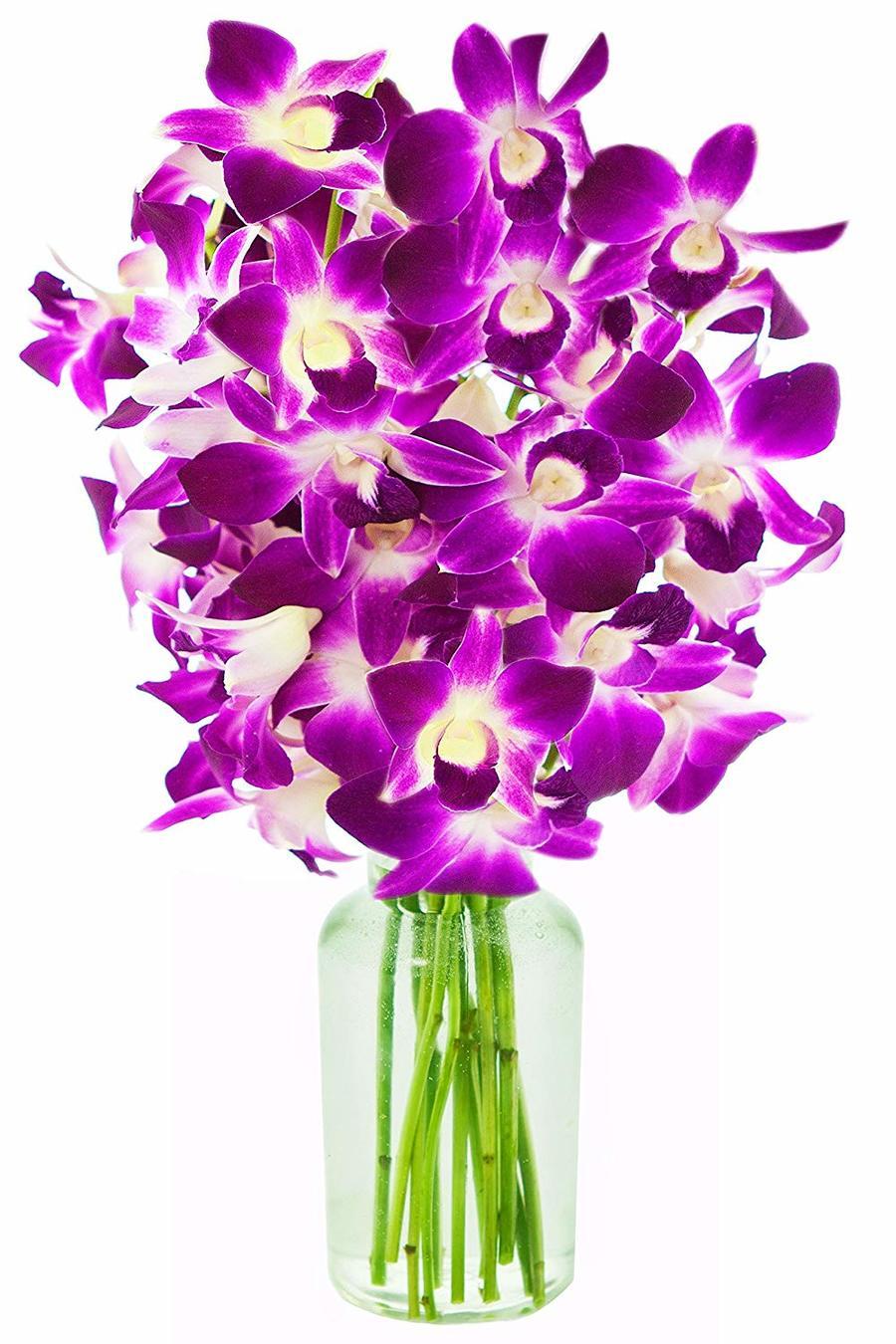 Download orchid bouquet clipart dendrobium orchids flower purple download orchid bouquet clipart dendrobium orchids flower purple plant izmirmasajfo