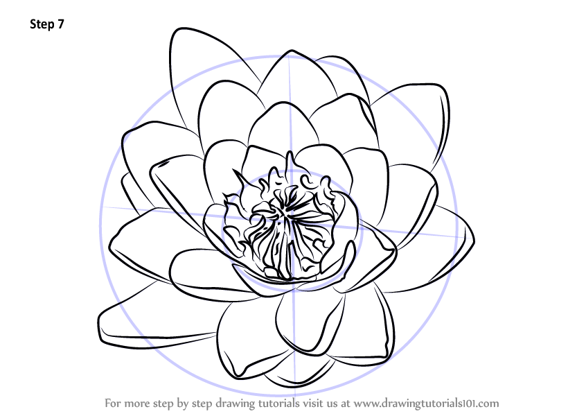 water lily drawing clipart Drawing Water lilies