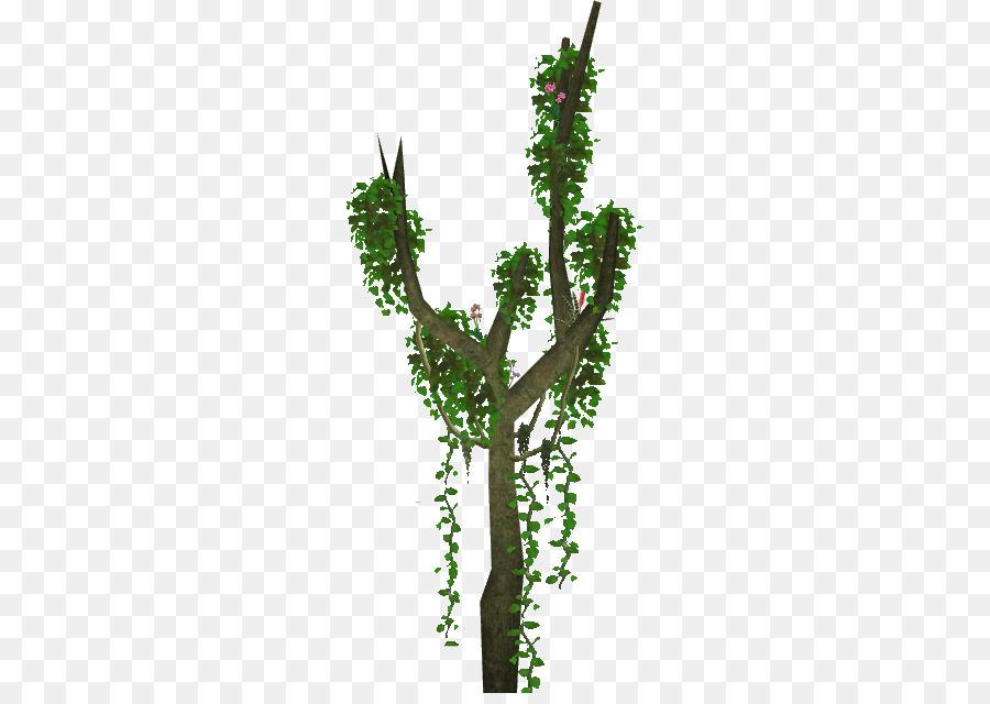 Jungle Tree clipart - Tree, Jungle, Plants, transparent clip art