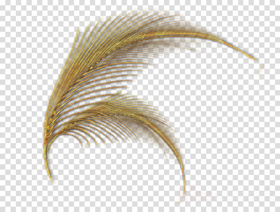 Feather clipart White feather