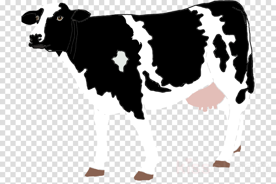 Cattle clipart Ayrshire cattle Beef cattle Holstein Friesian cattle