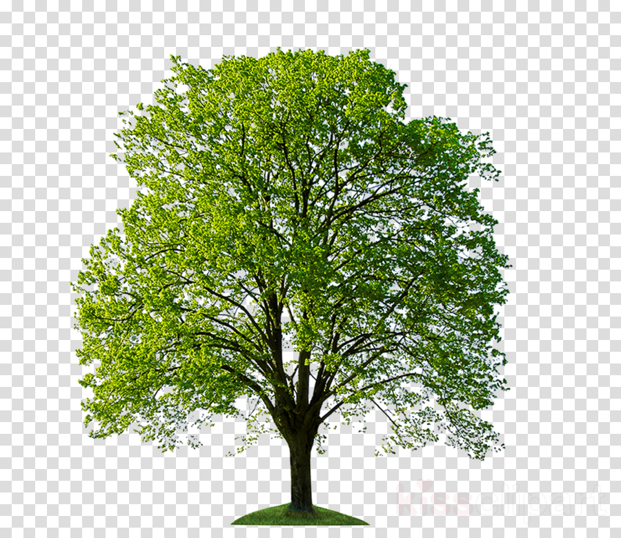 like a tree planted by streams of water: journal/notebook/diary: volume 1 (psalms) clipart Tree planting Stock photography