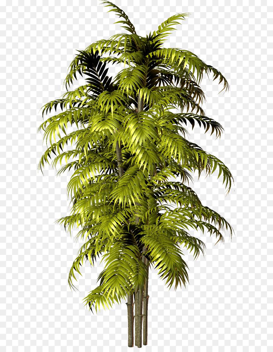 Asian palm areca, fucking black woman nude