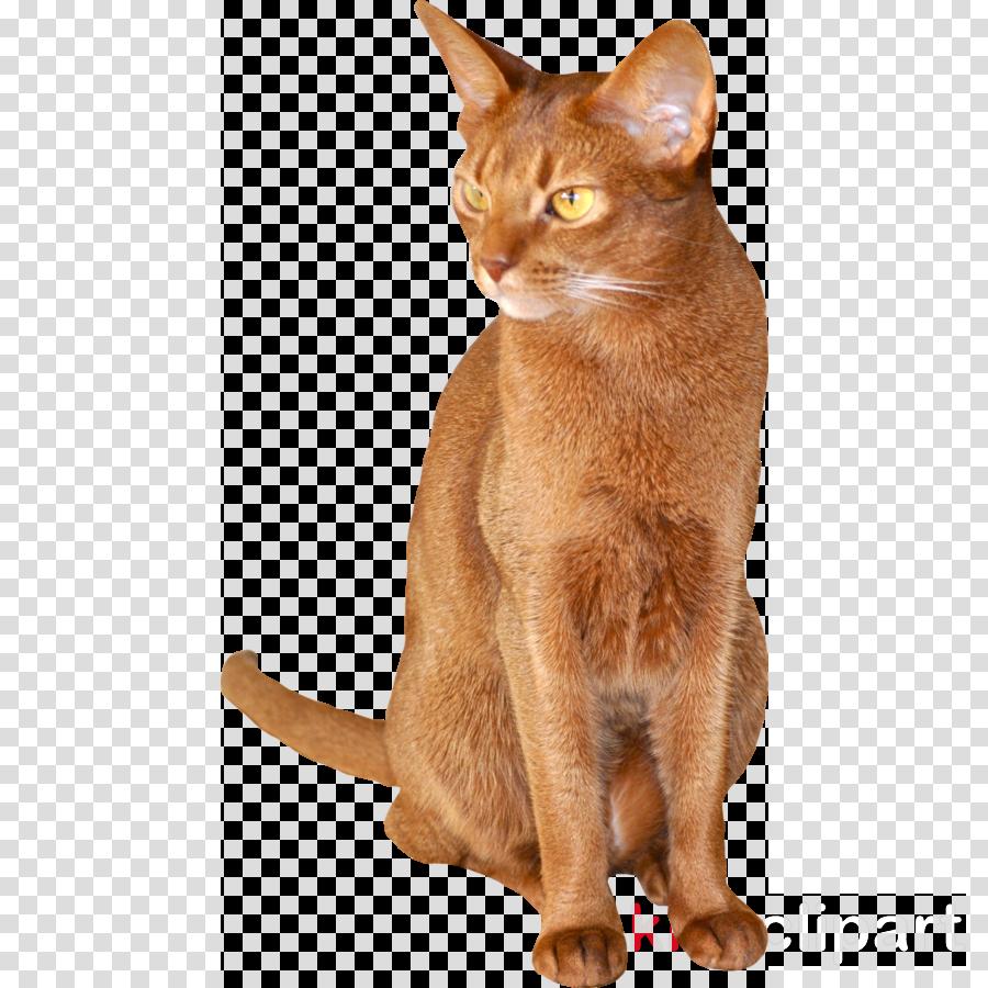 abyssinian cat transparent clipart Burmese cat Abyssinian cat Chausie