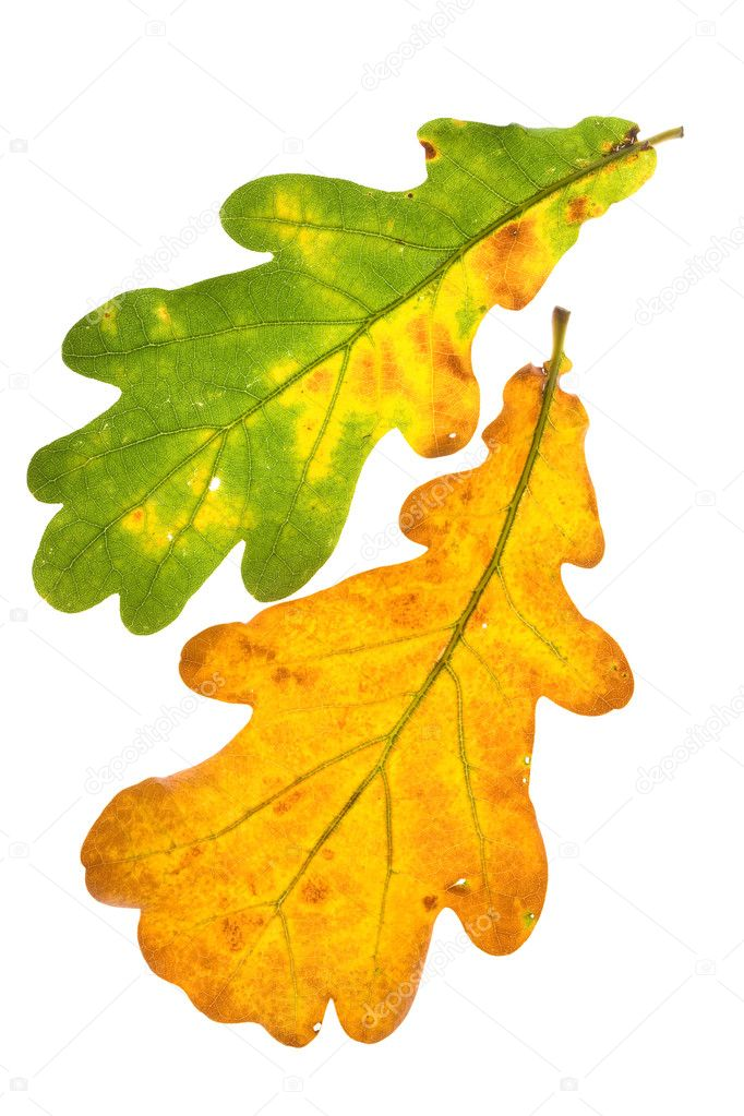 leaf yellow color tree png clipart free download