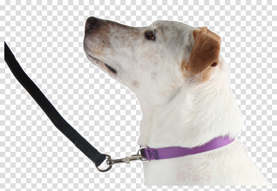 snout clipart Dog breed Companion dog