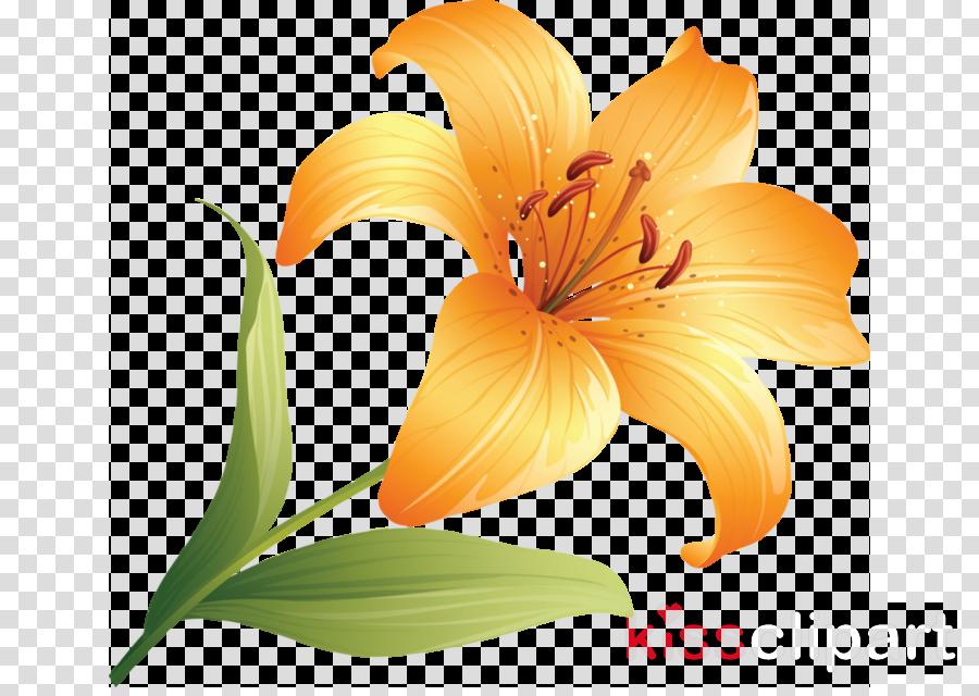 orange clipart Orange lily Tiger lily Orange day-lily