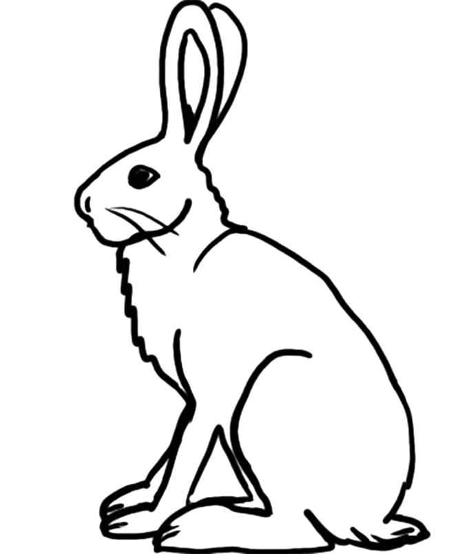 Rabbit Drawing Wildlife Transparent Image Clipart Free Download