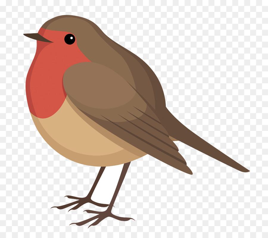Bird robin. Clipart illustration feather transparent