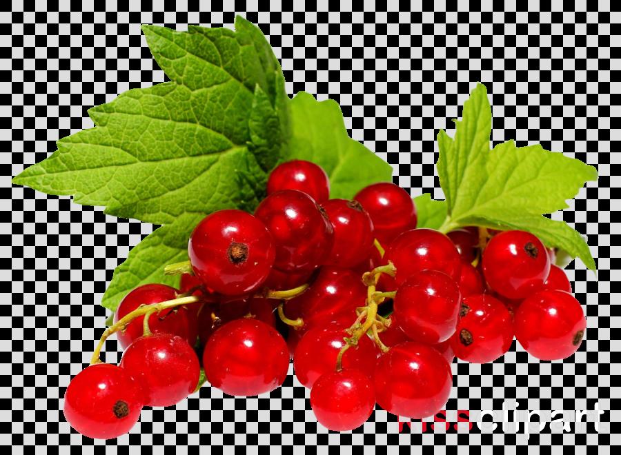 red currant png clipart Zante currant Redcurrant Blackcurrant