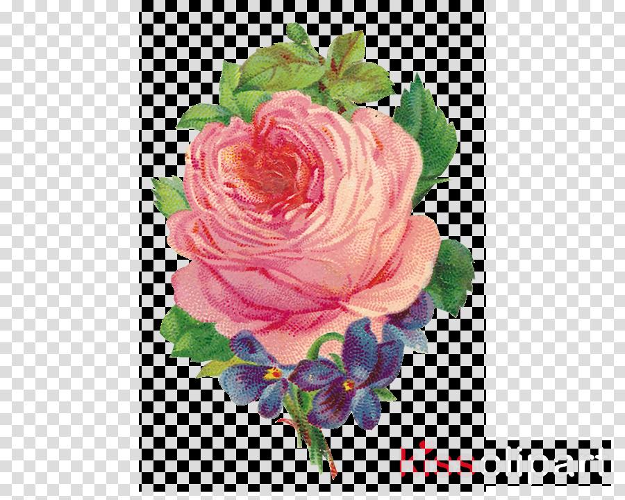 Flower Pink Rose Transparent Png Image Clipart Free Download