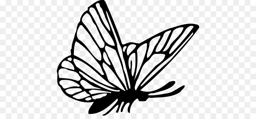 Butterfly Drawing Graphics Transparent Image Clipart Free