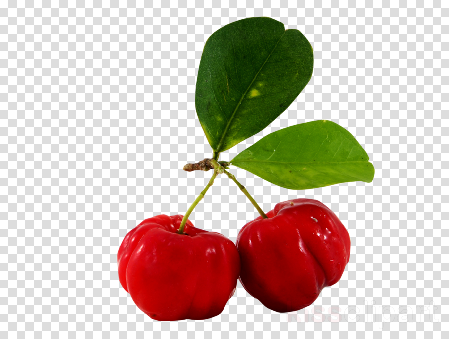 Acerola Cherries Images
