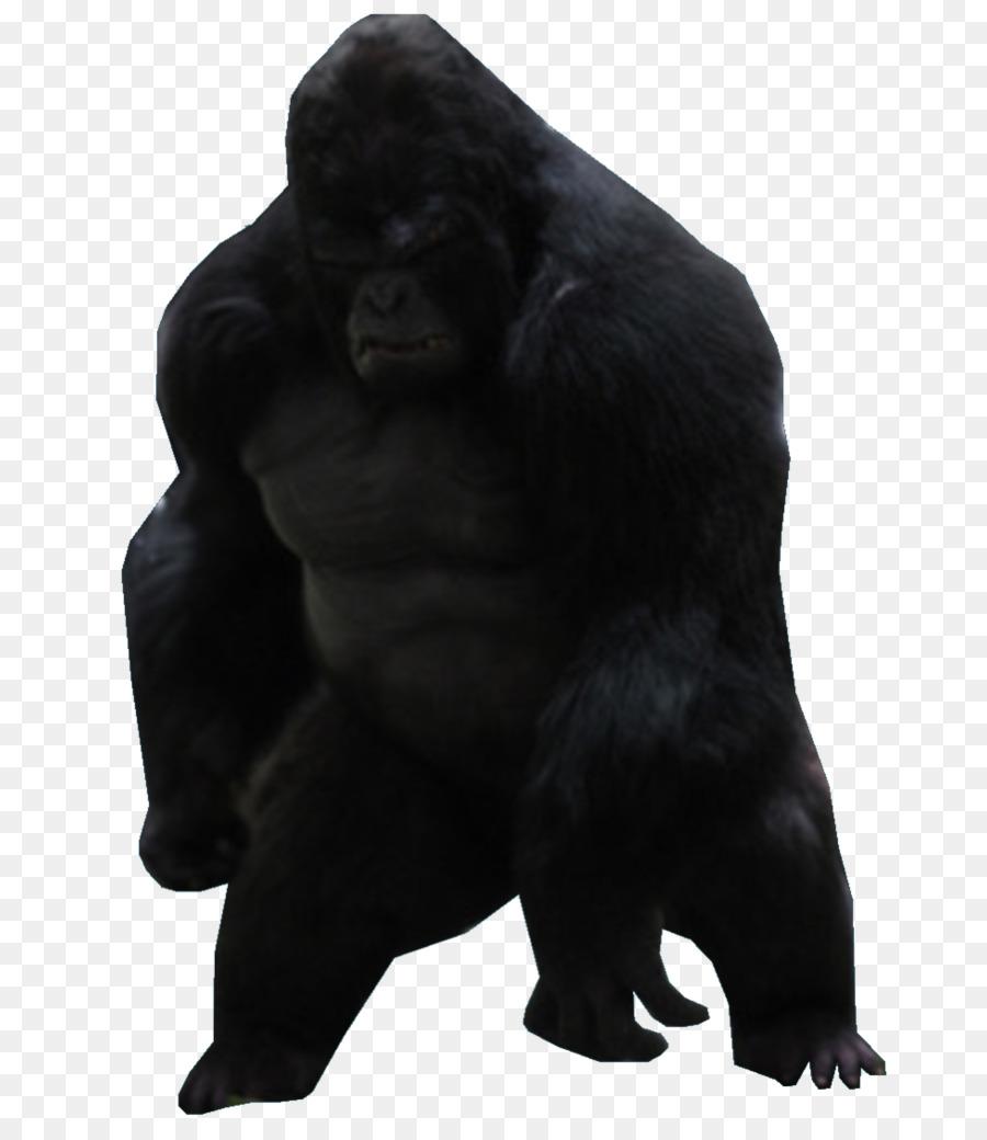 Gorilla clipart Common chimpanzee Gorilla Grodd Western gorilla