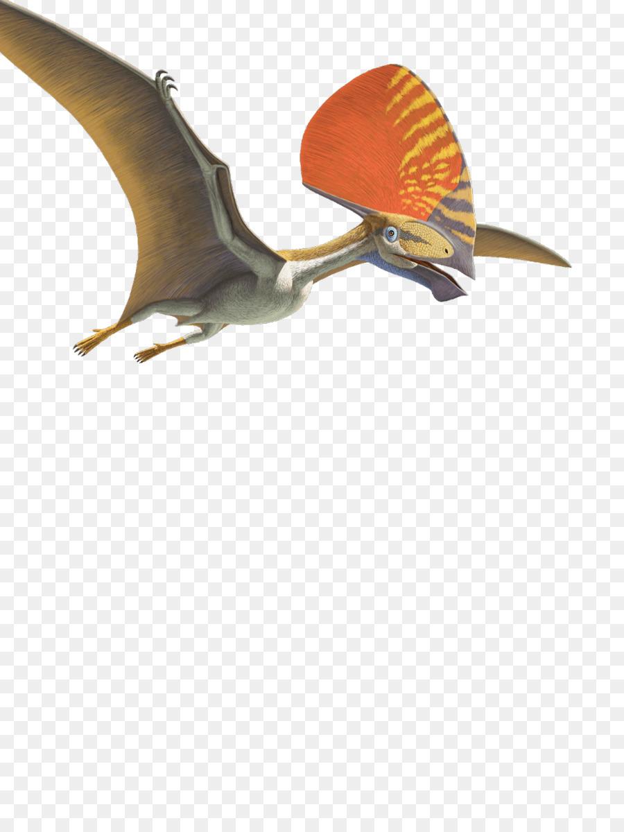 Flying Bird Background