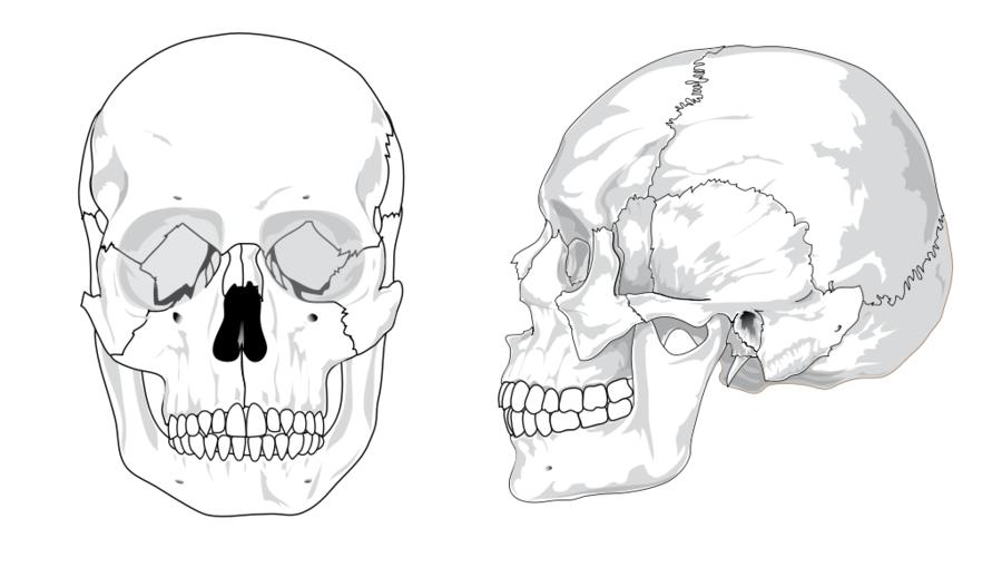 Skeleton Skull Diagram - Wiring Diagrams Schema