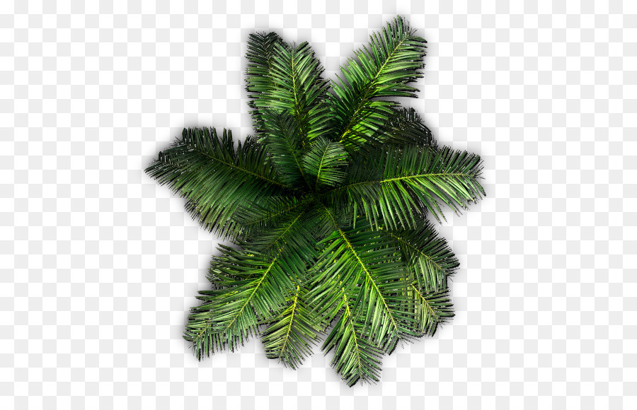 Christmas Tree Top View.Coconut Tree Cartoon Clipart Pine Tree Coconut