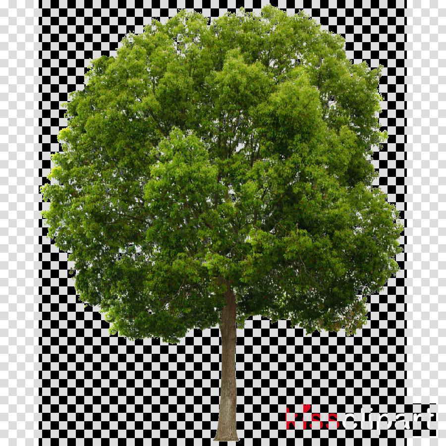 tree png transparent clipart Clip art