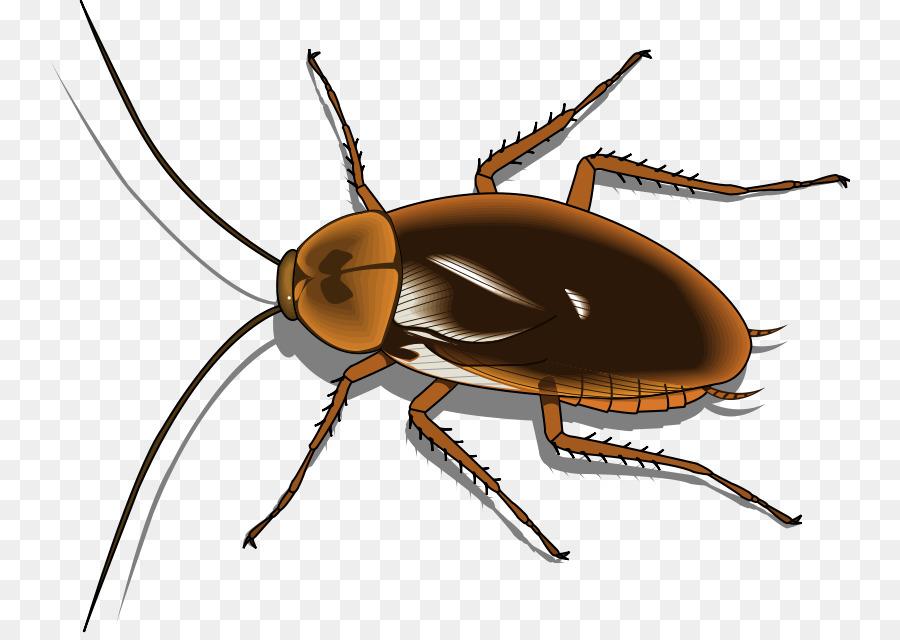 cockroach funny quotes clipart Cockroach Roach Killer Clip art