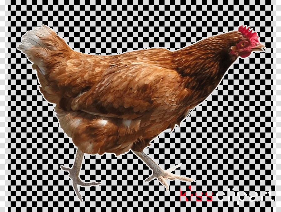 chicken png clipart Chicken Clip art