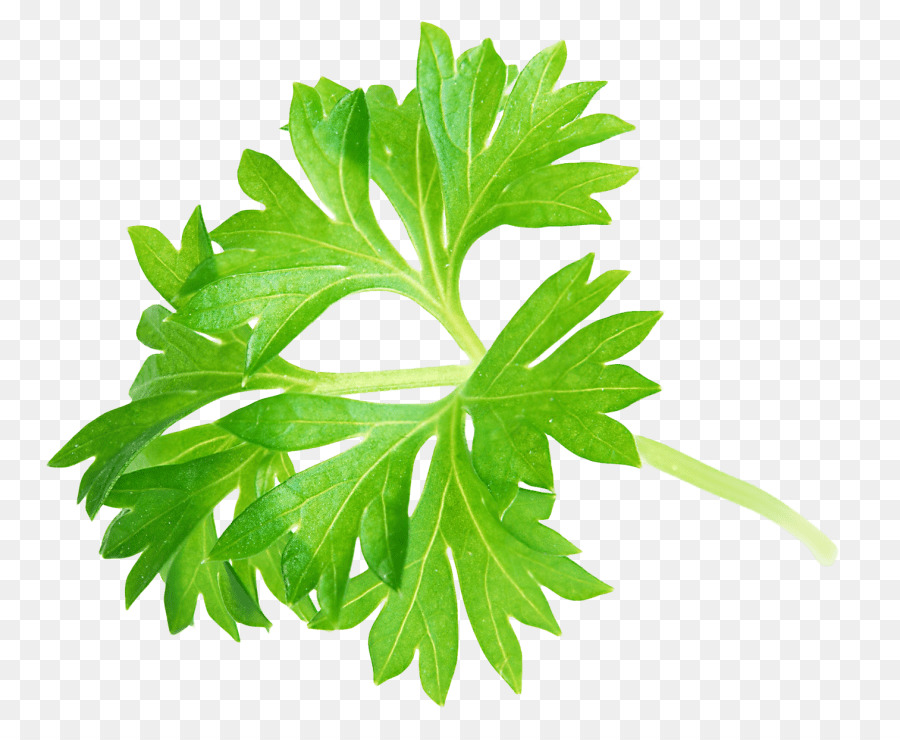 parsley png clipart Parsley Clip art