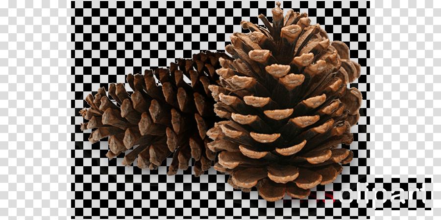 pine cones clipart Pine Conifer cone Welcome Center Closed