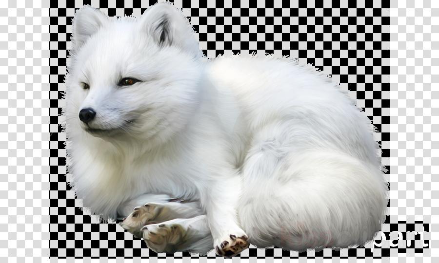 Arctic fox clipart Arctic fox Dog