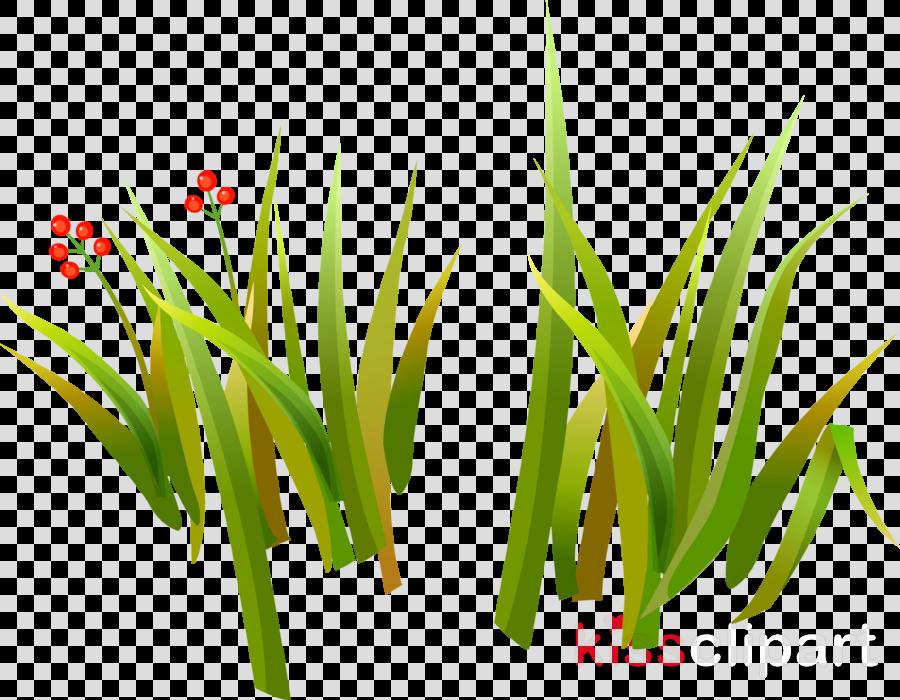 рисунок для детей трава clipart Herbaceous plant Clip art