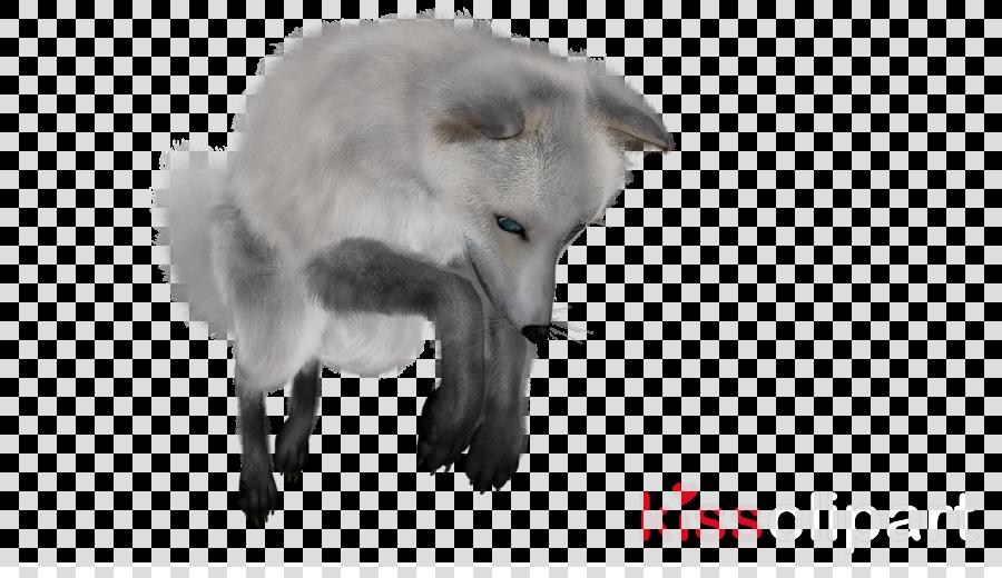 gray arctic fox clipart Arctic fox Red fox
