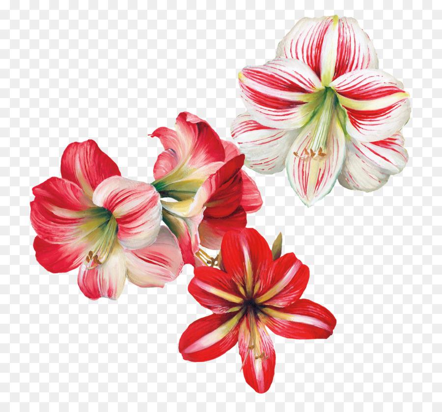 Lily Flower Cartoon