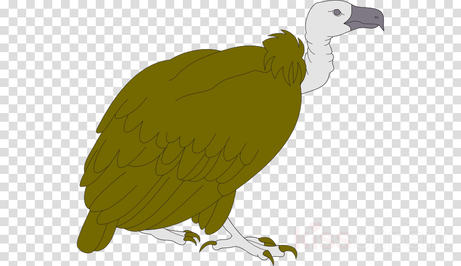 Vulture clipart Hawk Bird Turkey vulture