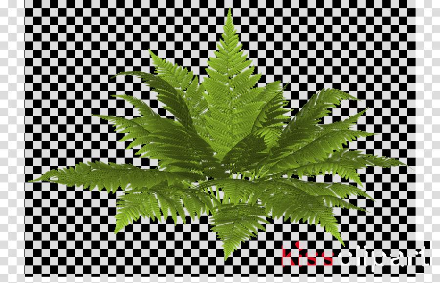 arbustos png clipart