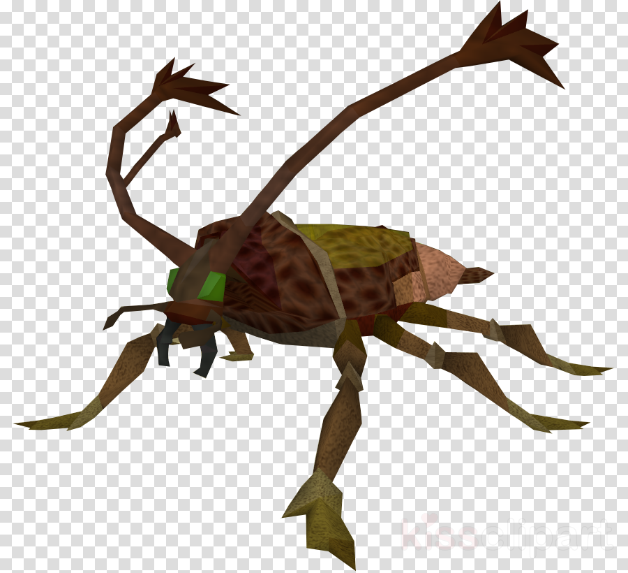 Cockroach clipart Cockroach Fly Insect