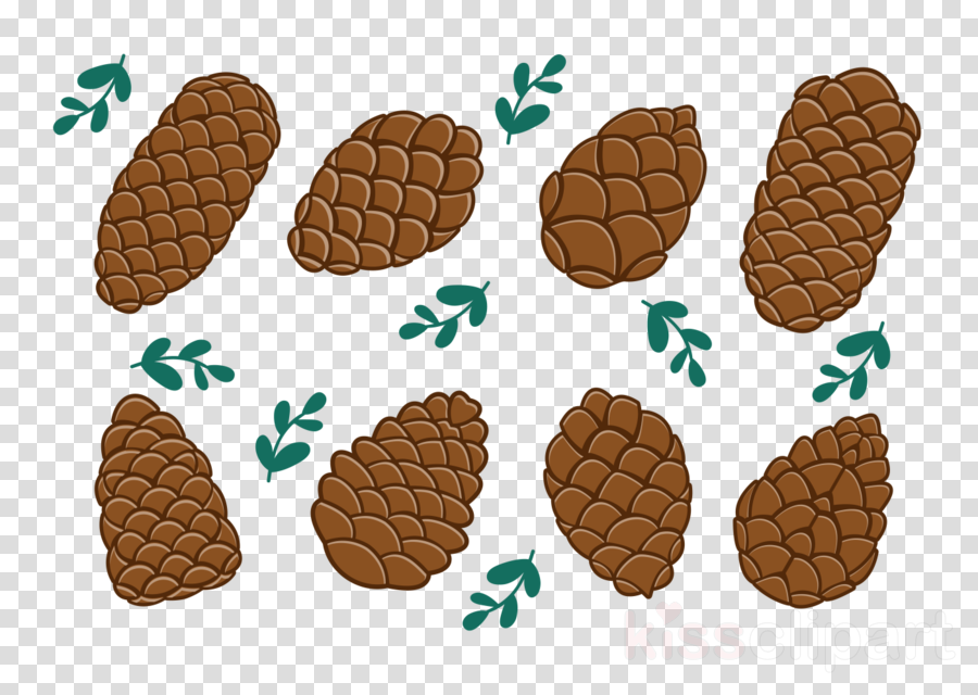 pine nuts vector png clipart Pine nut Conifer cone