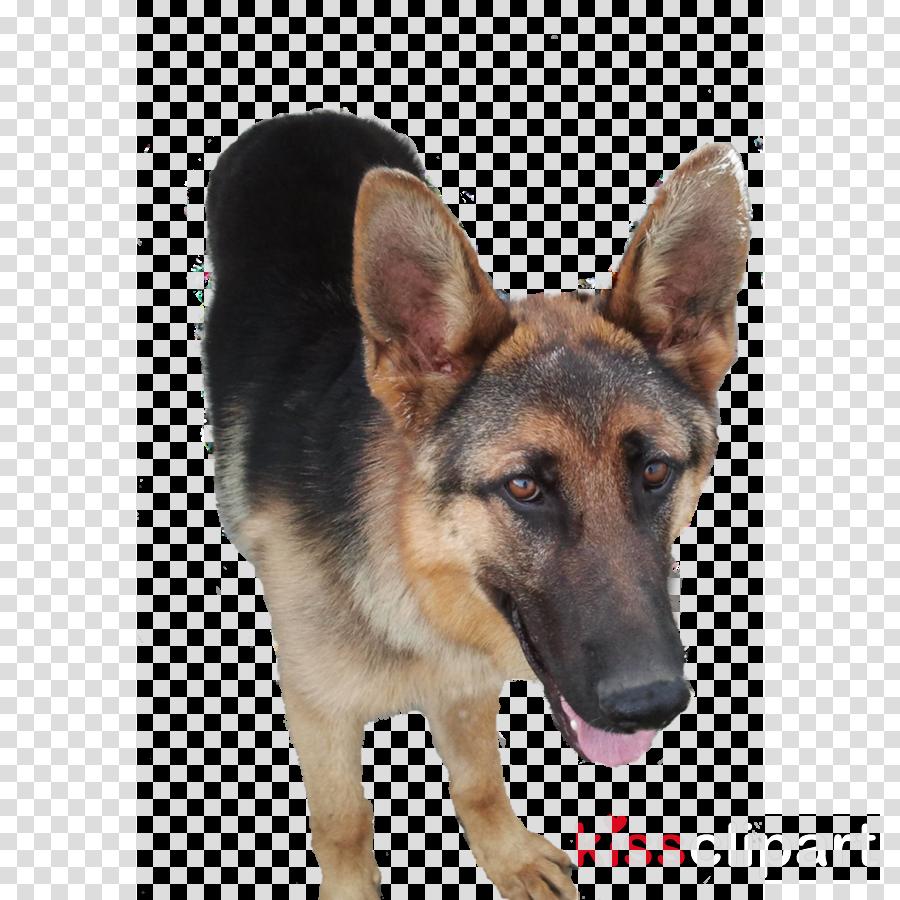 German Shepherd clipart Old German Shepherd Dog King Shepherd