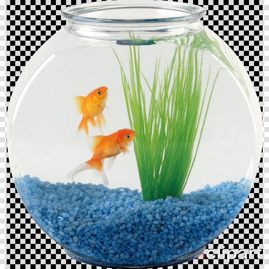fish bowl png clipart Oranda Aquarium Clip art